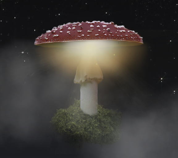 Xperia™ Magical Autumn Theme APK